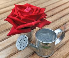 Free Red Rose And Metal Royalty Free Stock Photo - 31660215