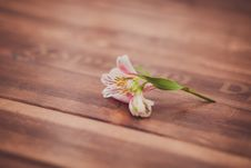 Free Fresh Chamomile Flowers On The Wooden Table Stock Image - 31663271