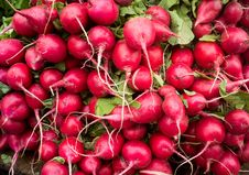 Free Close Up Photograph Of Fresh Radish Royalty Free Stock Image - 31669226