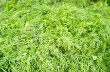 Close Up Photograph Of Fresh Dill