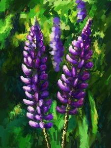 Free Lupine Flower Stock Photography - 31672302