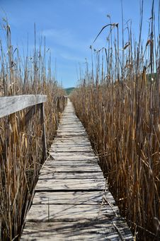 Free Wooden Footbridge At Reed Reserve. Royalty Free Stock Photography - 31674647