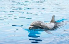Free Dolphin In Generic Dolphinarium Stock Photography - 31677012
