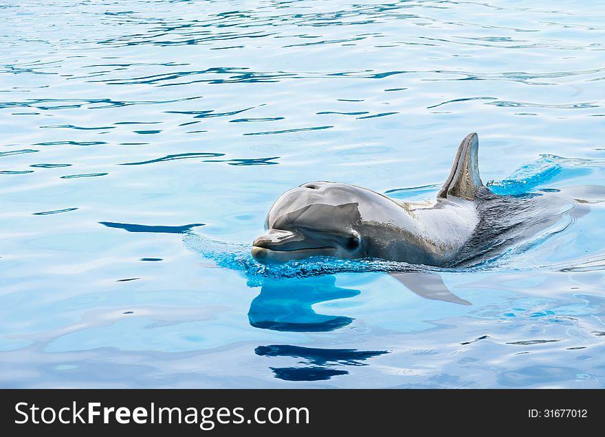 Dolphin in generic Dolphinarium