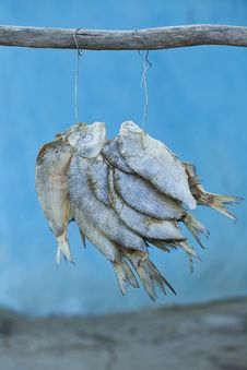 Free Pack Of Fish Hanged To Dry With Salt In Front Of The House Stock Photography - 31685062