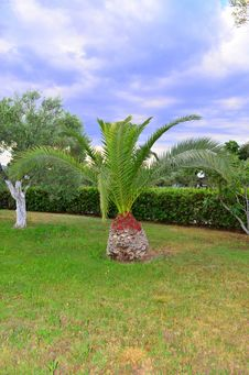 Free Palm Tree Stock Photography - 31689732