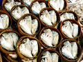 Free Short - Bodied Mackerel Stock Image - 31690831