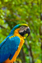 Free Macaw Royalty Free Stock Photo - 31691295