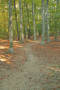Free Forest Path, Pathway, Trees Royalty Free Stock Photography - 31694497