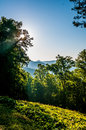 Free Blue Ridge Parkway Early Morning Royalty Free Stock Image - 31696486