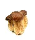 Free Porcini Mushrooms Royalty Free Stock Images - 31699589