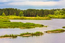 Free View Of A River And The Forest Stock Image - 31698191