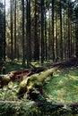 Free Dense Wood. Stock Photo - 3170060