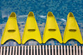 Free Four Yellow Flippers Expecting Royalty Free Stock Images - 3172579