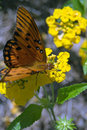 Free Orange Butterfly Stock Photo - 3174510