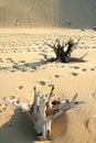 Free Desert Stock Photos - 3177083