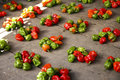Free Chili Peppers Royalty Free Stock Photo - 3177675