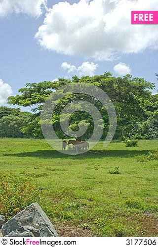 Free Horses And Tree Royalty Free Stock Image - 3177506