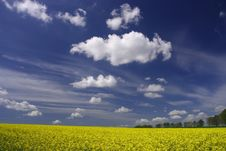 Rape Field And White Clouds Royalty Free Stock Photos