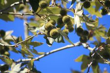 Free Tree Product Stock Photo - 3170290