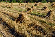 Free Haymaking Royalty Free Stock Photo - 3170485
