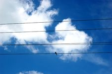 Sky, Clouds And Bird Stock Images