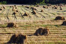 Free Haymaking Royalty Free Stock Photos - 3172628