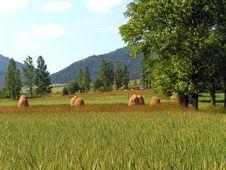 Harvests Stock Photo