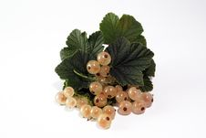 Free White Currant Royalty Free Stock Image - 3173386