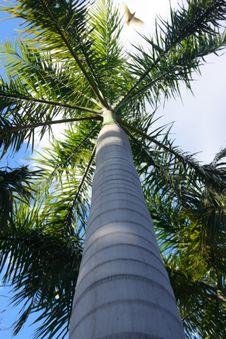 Free Palm Royalty Free Stock Photo - 3173795