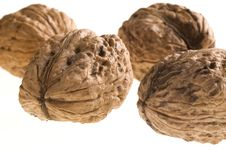 Free Walnuts Royalty Free Stock Images - 3174289