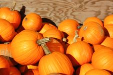 Free Pumpkins Galore Royalty Free Stock Images - 3174589
