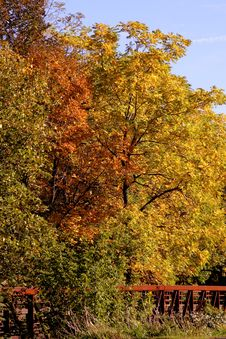 Fall Autumn Colors Royalty Free Stock Photo