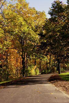 Free Fall Foliage Royalty Free Stock Photography - 3174627