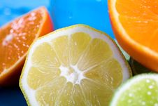 Free Oranges And Lemons Stock Photo - 3174630