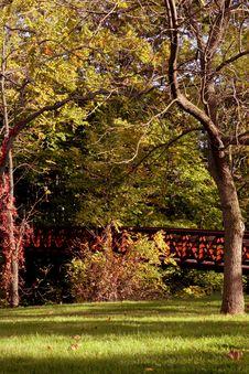 Free Fall Foliage Stock Image - 3174631