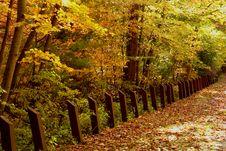Free Fall Foliage Royalty Free Stock Photo - 3174635