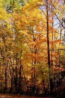 Free Fall Foliage Royalty Free Stock Photo - 3174675