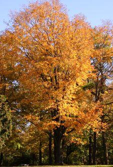 Free Fall Foliage Stock Images - 3174954