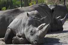 Free White Rhinoceros Royalty Free Stock Images - 3175169