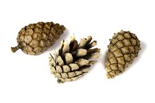 Free Several Pine Cones Royalty Free Stock Photos - 3175528
