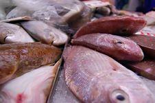 Free Fish Monger Royalty Free Stock Image - 3176516