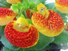Free Strange Flower Stock Images - 3177234