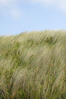 Free Grass Dunes Stock Photography - 3177462
