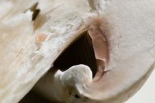 Free Mushroom Stock Photo - 3178030