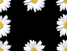 Free Camomile Flowers Frame Royalty Free Stock Photos - 3178638