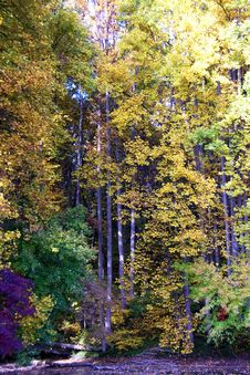 Free Fall Foliage In The Forest Stock Images - 3179224