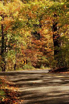 Free Fall Foliage Royalty Free Stock Image - 3179806