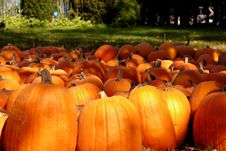 Free Pumpkin Patch Stock Image - 3179811