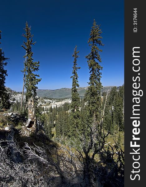 Glen in Wasatch Mountains